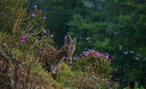 Blossom International Park in Munnar