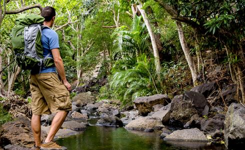 Travel through the jungle
