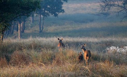 Kanha National Park in Madhya Pradesh