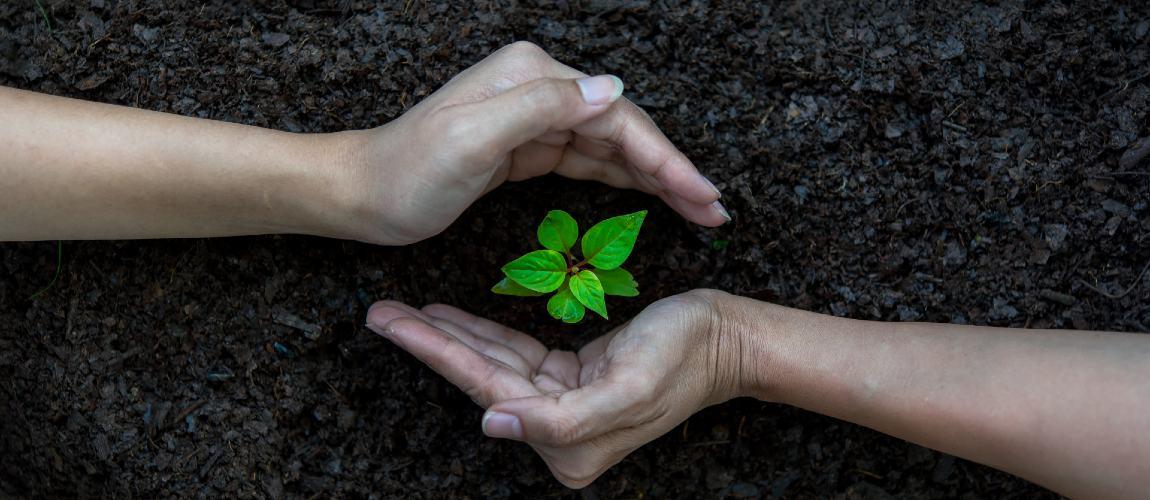 World Environment Day 2021: How Club Mahindra's Hariyali Initiative Supports Environment & Local Communities