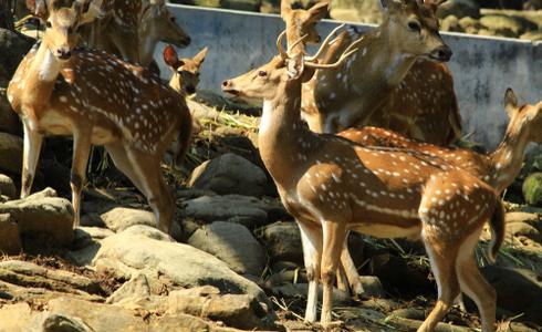 Places to Visit Dehradun - Malsi Deer Park