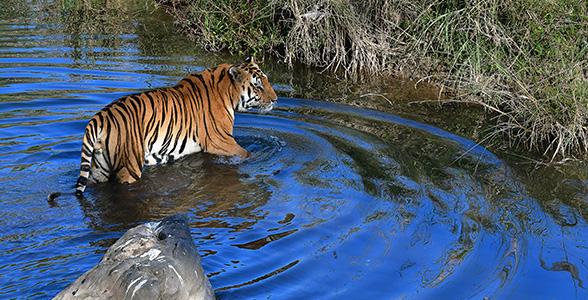 Delhi - Jim Corbett National Park