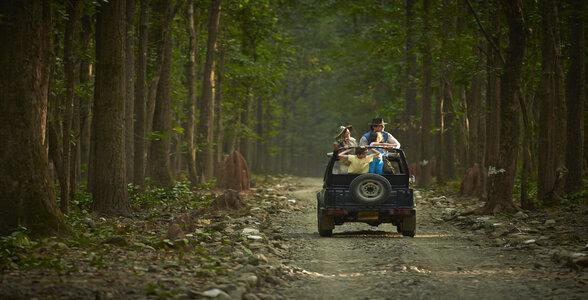Head out for a Jungle Safari