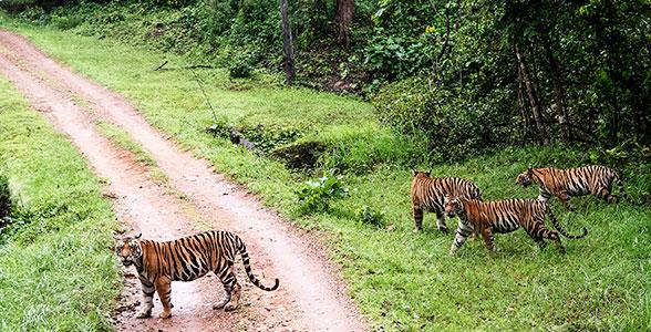 Kanha Tiger Reserve, Madhya Pradesh