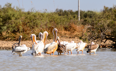 Things to Do in Kochi - Catch up with the birds