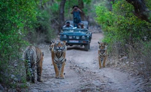 Places to Visit Rajasthan - Ranthambore National Park