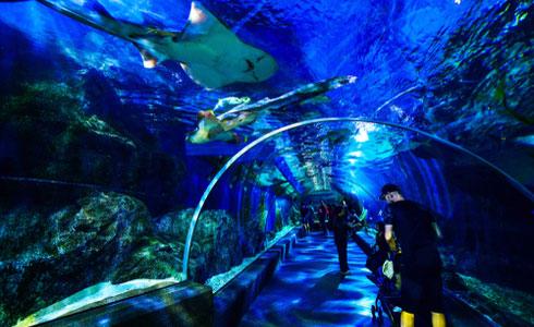 Sea Life Bangkok Ocean