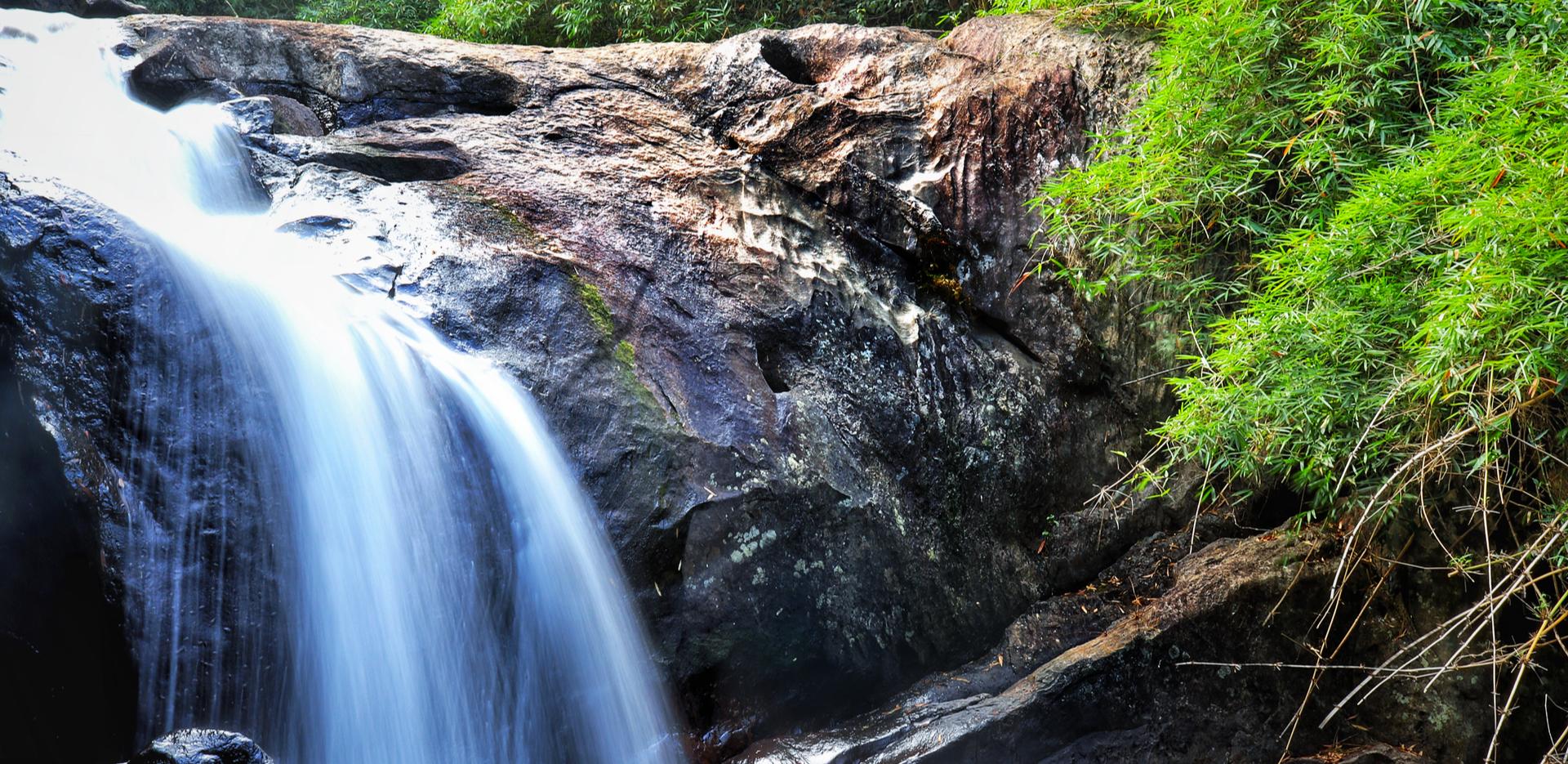 Rainforest Of Wayanad