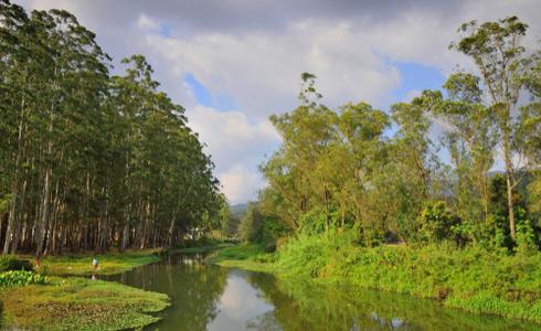 Blossom Hydel Park Munnar