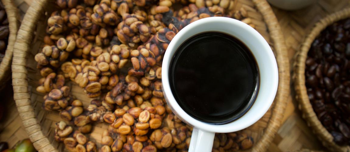 Civet coffee in Coorg