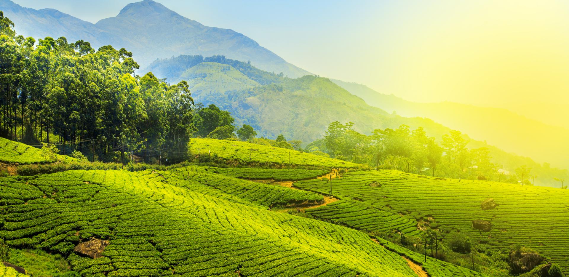 Munnar Town in Kerala