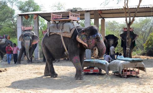 Dera Amer, Elephant Safari