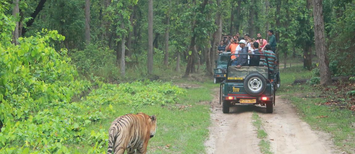 How to reach Kanha National Park