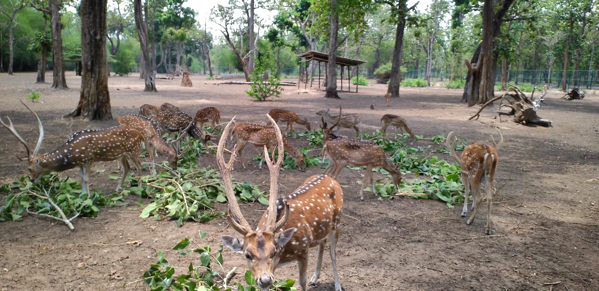 deer aprk in cauvery nisargadhama