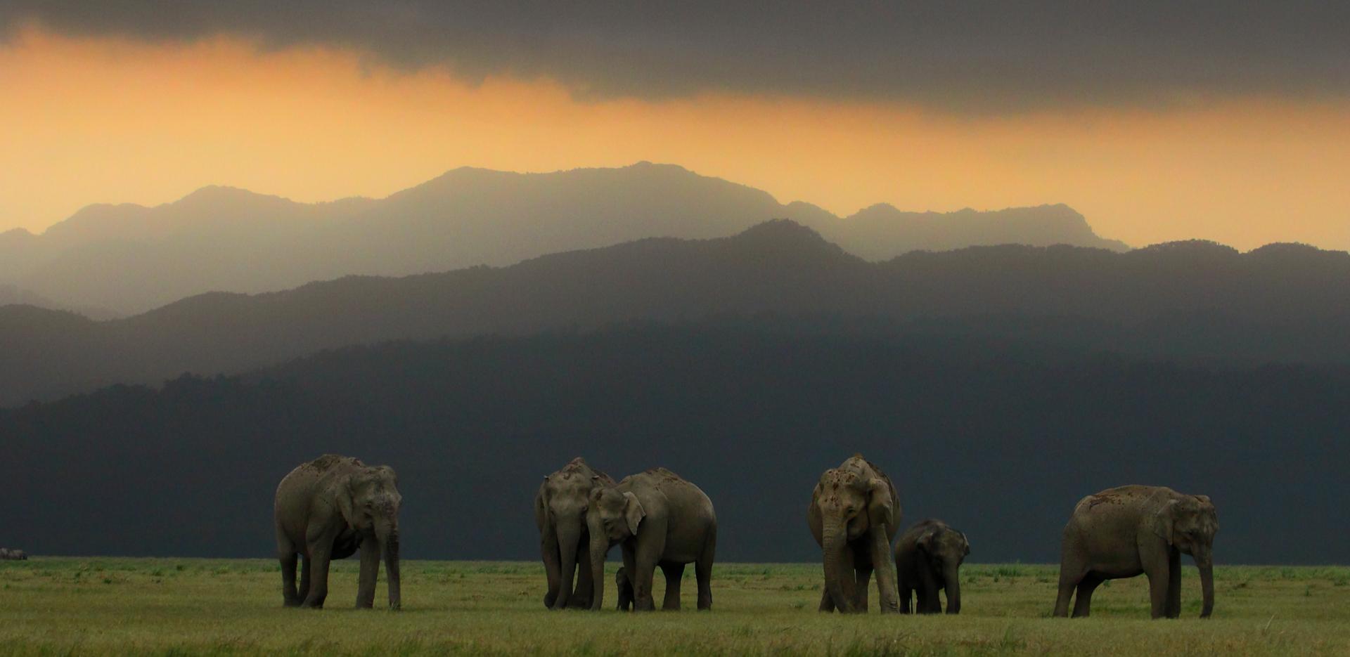 Elephant Herd Corbett National Park