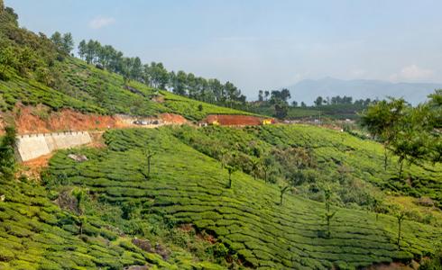 Places To Visit In Munnar - Devikulam