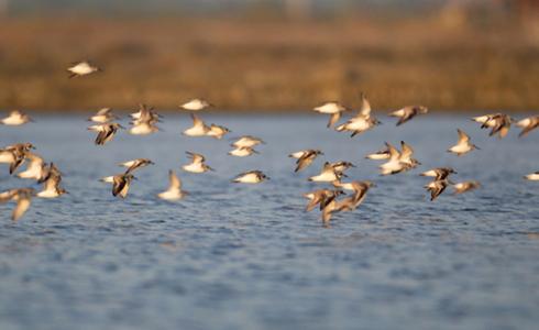 Birding in Goa