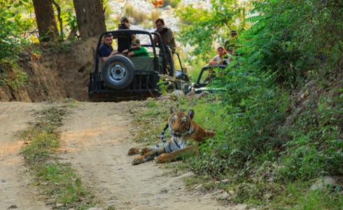 Corbett Jungle Safari