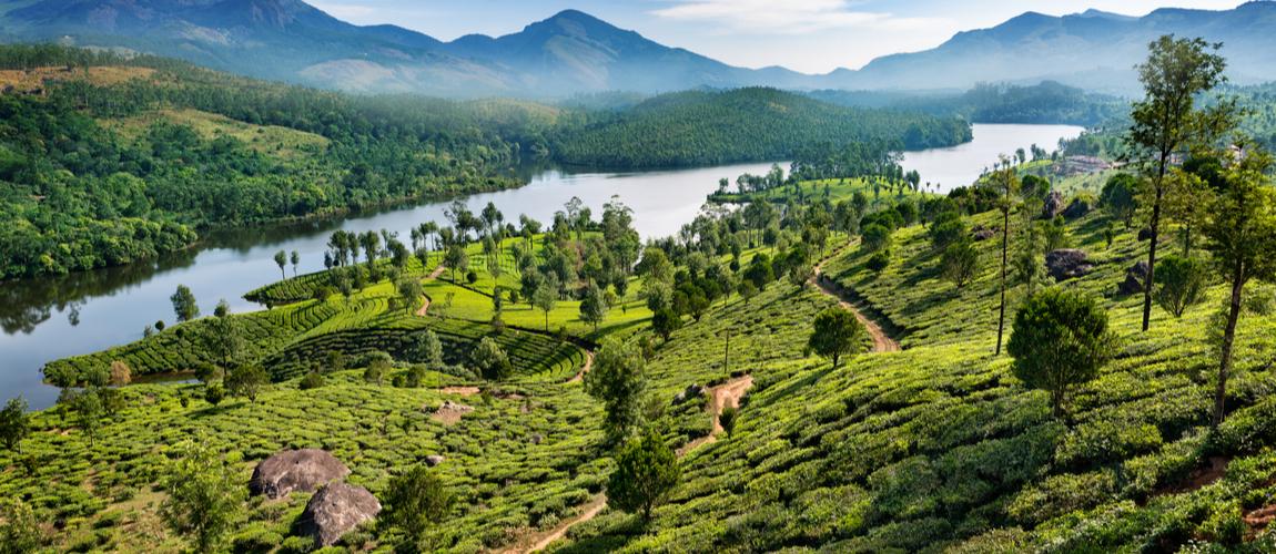 Tea plantations at Munnar