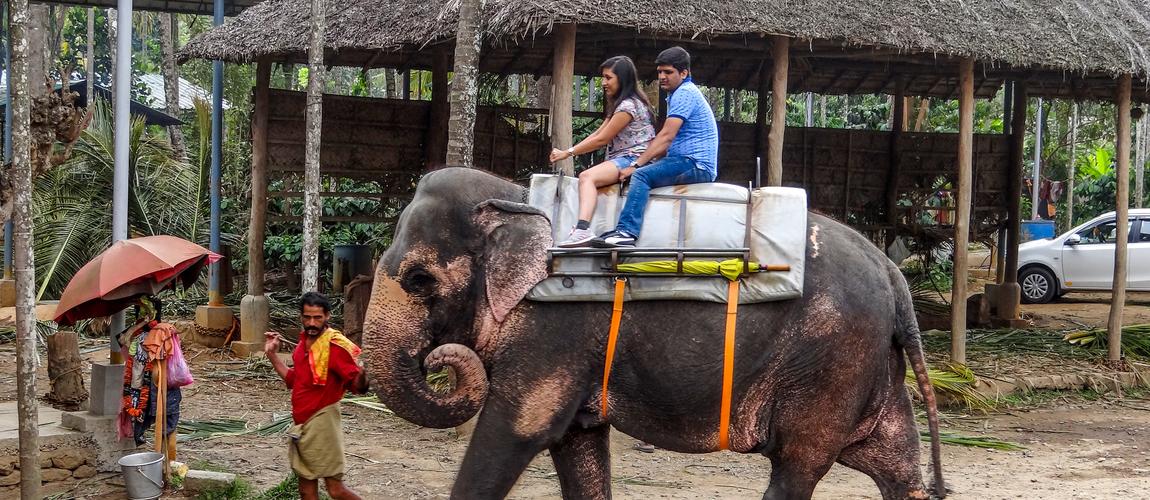 A couple enjoying the elephant ride