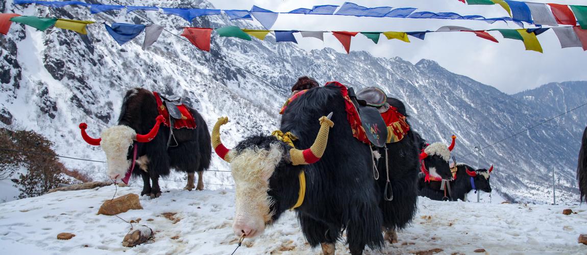 Sikkim Family Holiday Club Mahindra