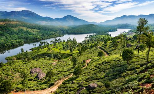 Summer Vacation in India - Munnar