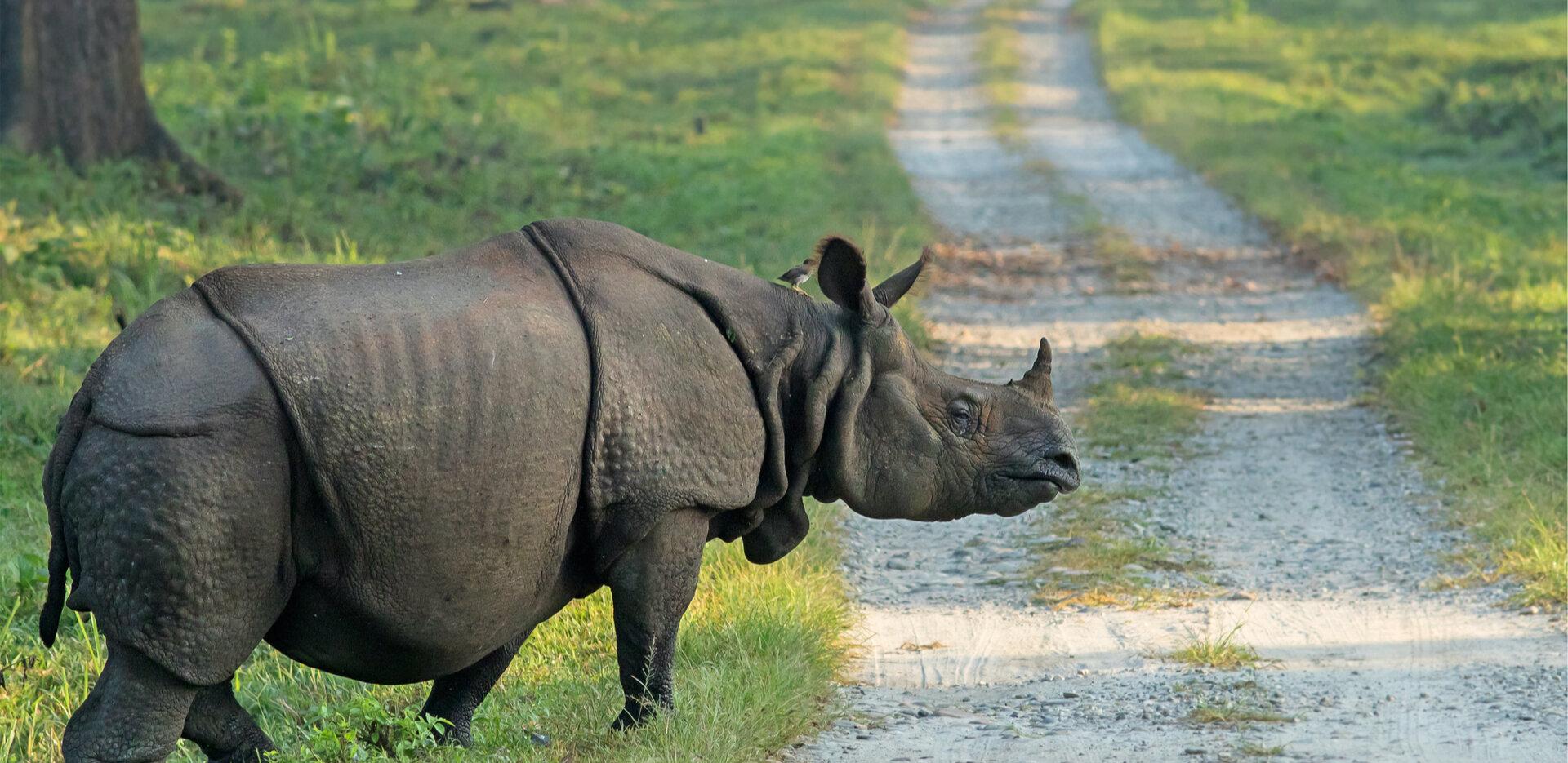 World Rhino Day 2021